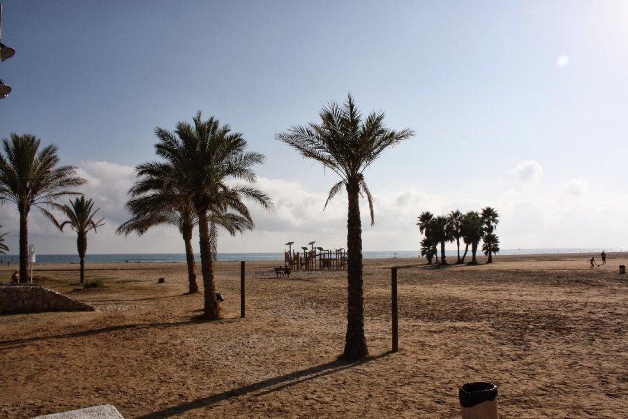 La playa de Coma-ruga y sus palmeras