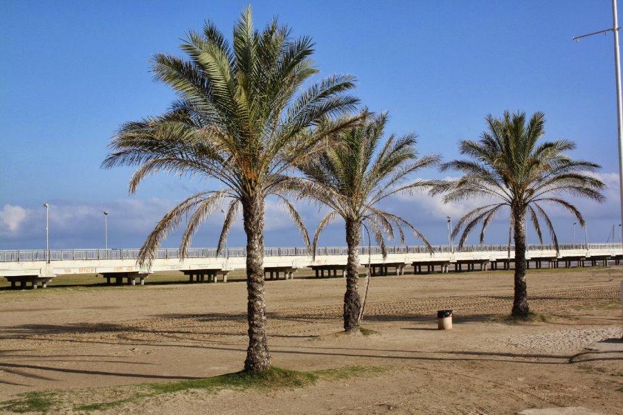 La playa de Coma-ruga y sus palmeras. Foto de palmeras